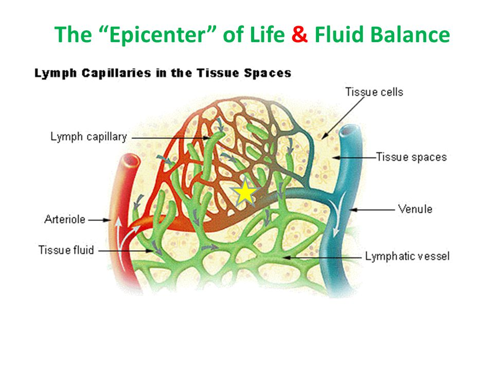 The Epicenter of Life & Fluid Balance
