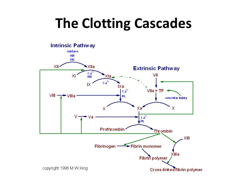 The Clotting Cascades