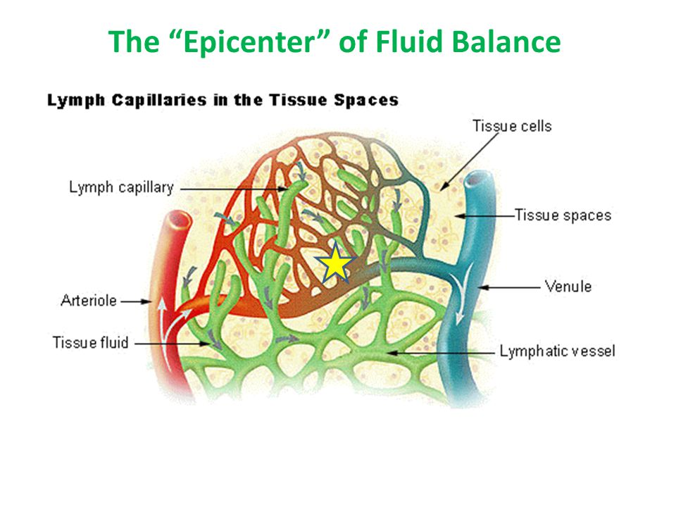 The Epicenter of Fluid Balance