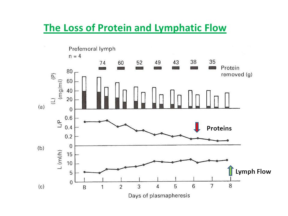 The Loss of Protein and Lymphatic Flow