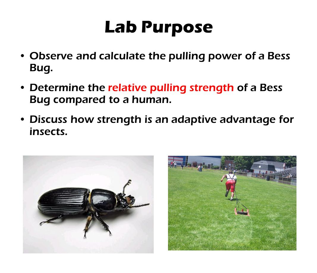 Lab Purpose Observe and calculate the pulling power of a Bess Bug.