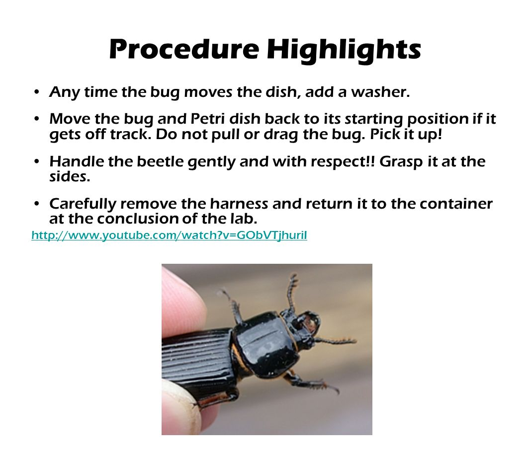 Procedure Highlights Any time the bug moves the dish, add a washer.