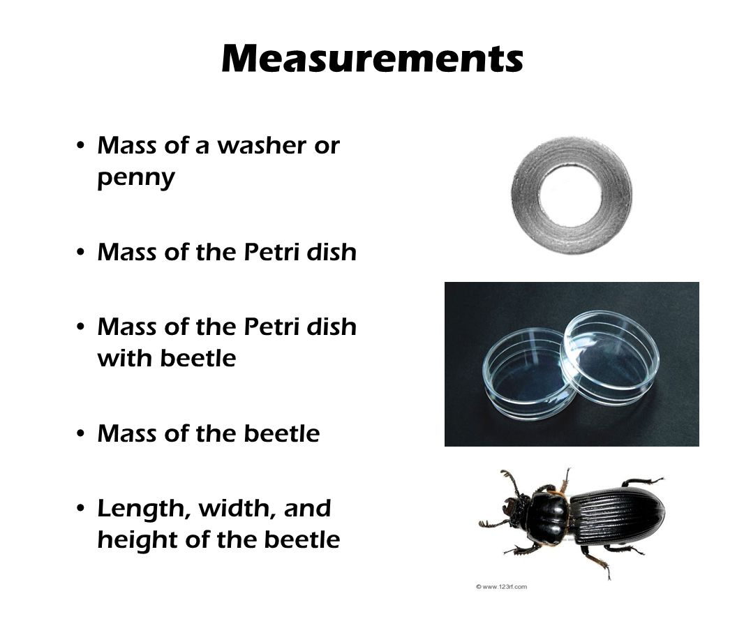Measurements Mass of a washer or penny Mass of the Petri dish