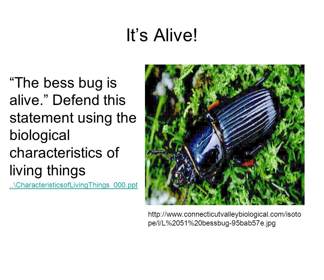 It's Alive! The bess bug is alive. Defend this statement using the biological characteristics of living things.