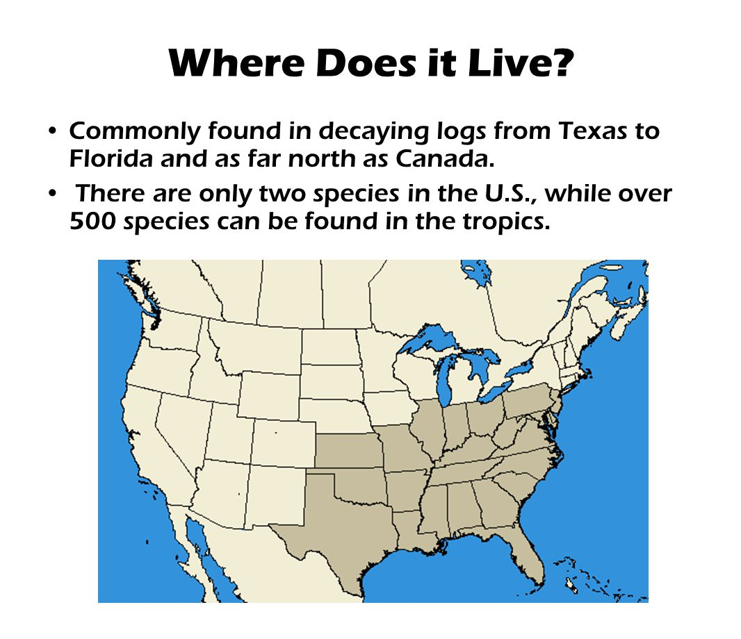 Where Does it Live Commonly found in decaying logs from Texas to Florida and as far north as Canada.