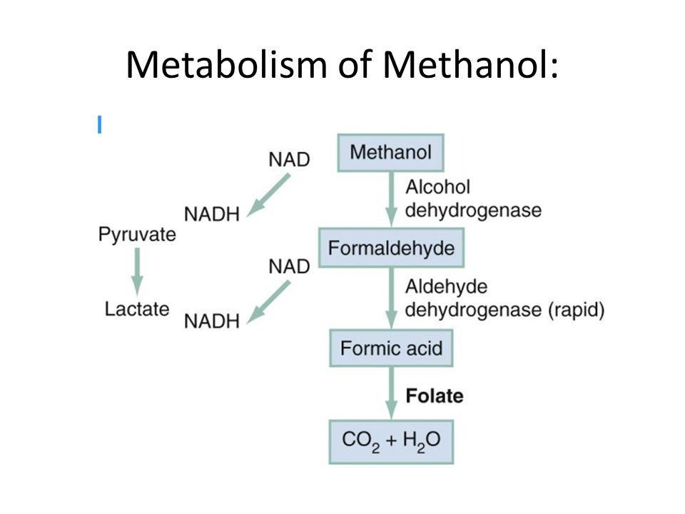 Metabolism of Methanol: