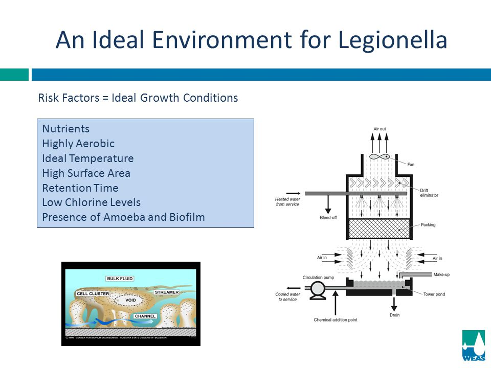 An Ideal Environment for Legionella
