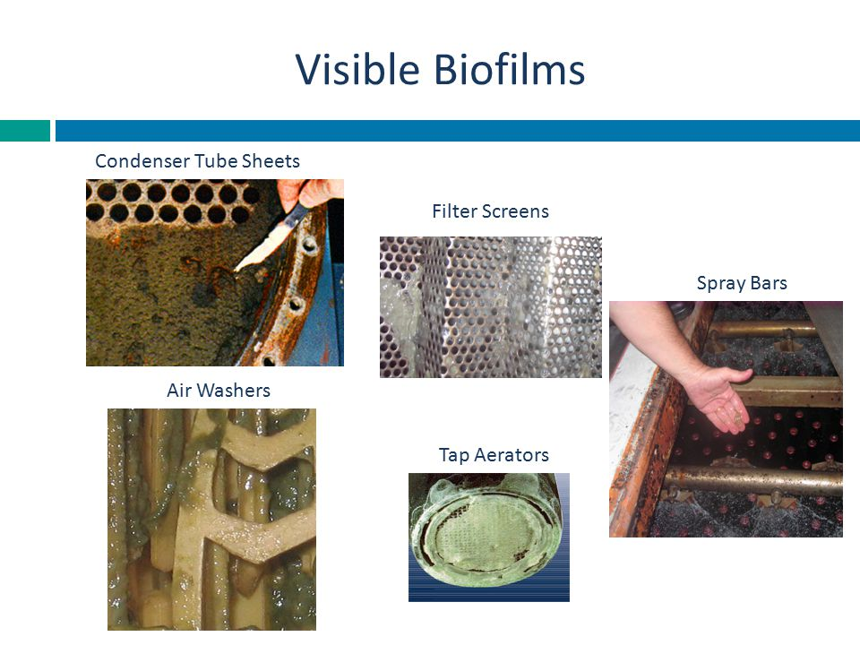 Visible Biofilms Condenser Tube Sheets Filter Screens Spray Bars