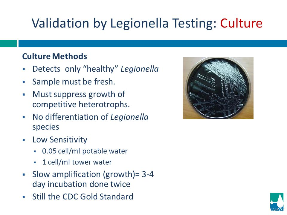 Validation by Legionella Testing: Culture