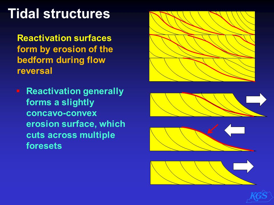 Tidal structures Reactivation surfaces form by erosion of the bedform during flow reversal.