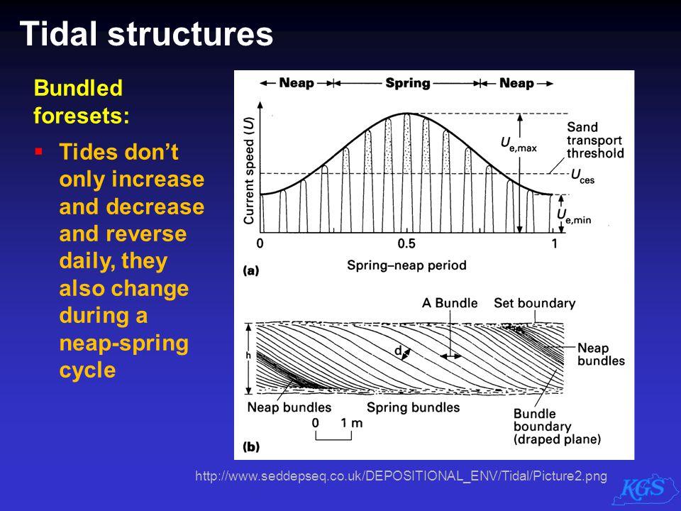 Tidal structures Bundled foresets: