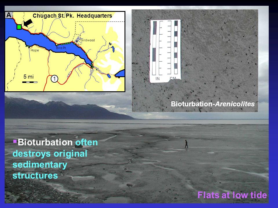 Bioturbation often destroys original sedimentary structures