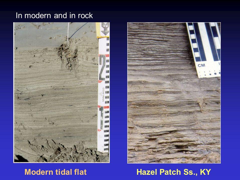 In modern and in rock Modern tidal flat Hazel Patch Ss., KY