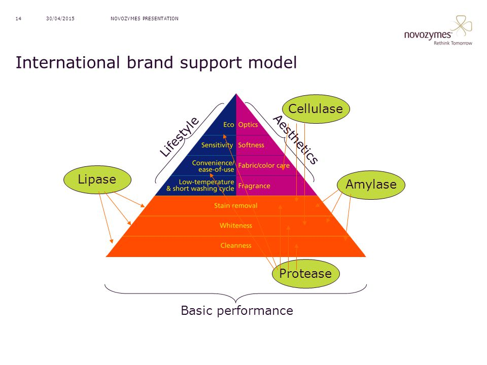 International brand support model