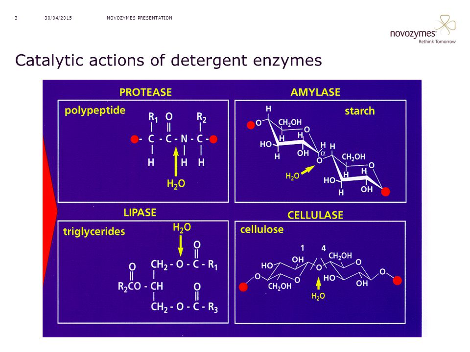 Catalytic actions of detergent enzymes
