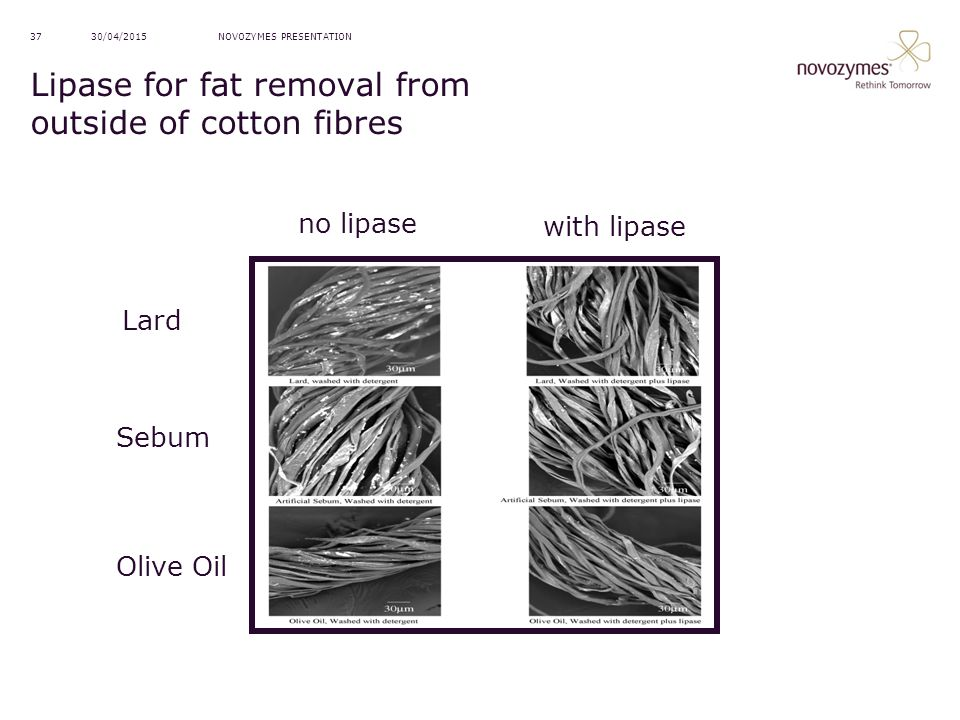 Lipase for fat removal from outside of cotton fibres