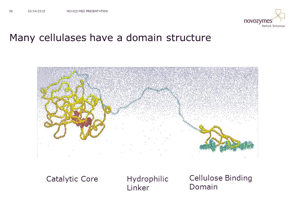 Many cellulases have a domain structure