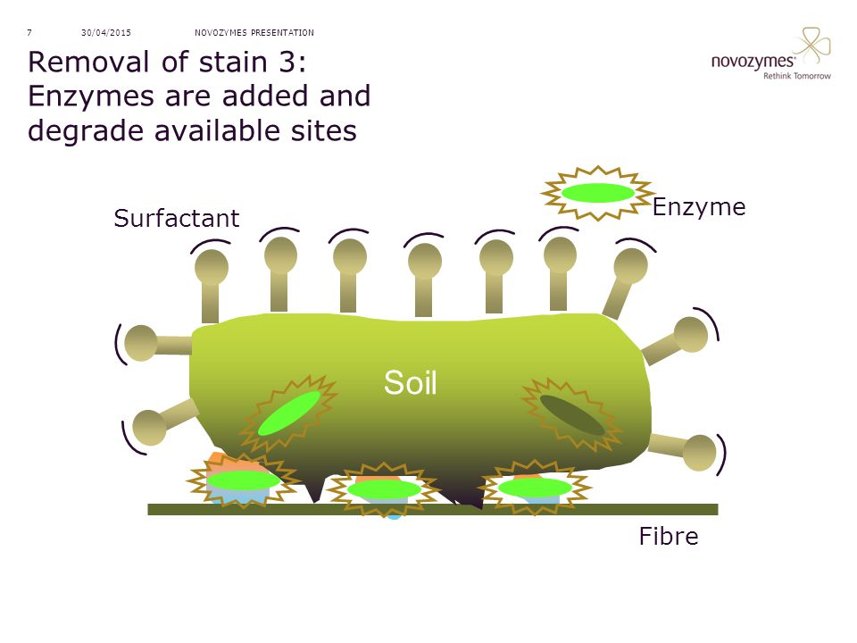 Removal of stain 3: Enzymes are added and degrade available sites