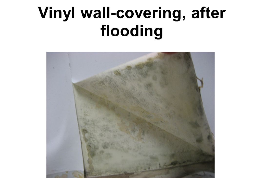 Vinyl wall-covering, after flooding