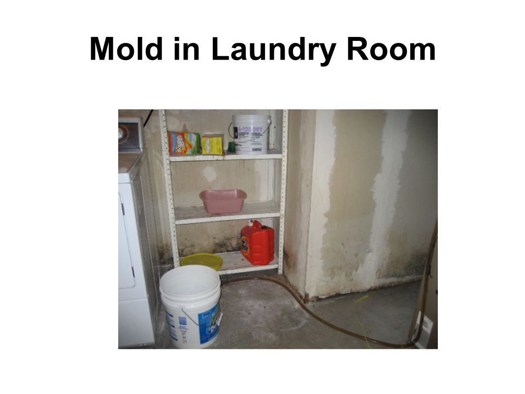 Mold in Laundry Room