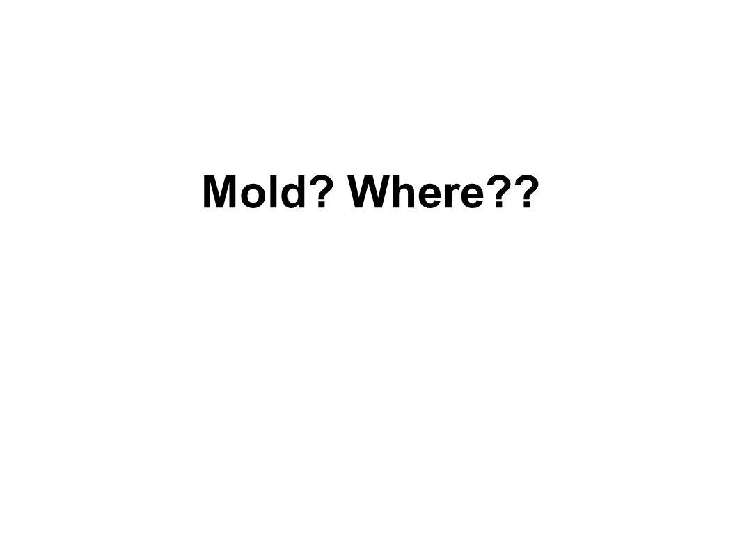 Mold Where