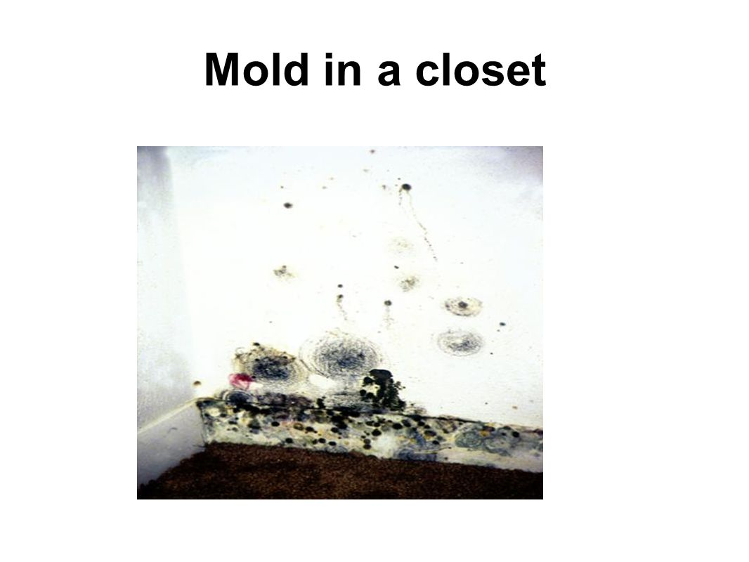 Mold in a closet