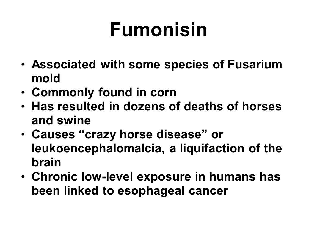 Fumonisin Associated with some species of Fusarium mold