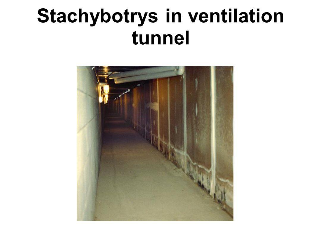 Stachybotrys in ventilation tunnel