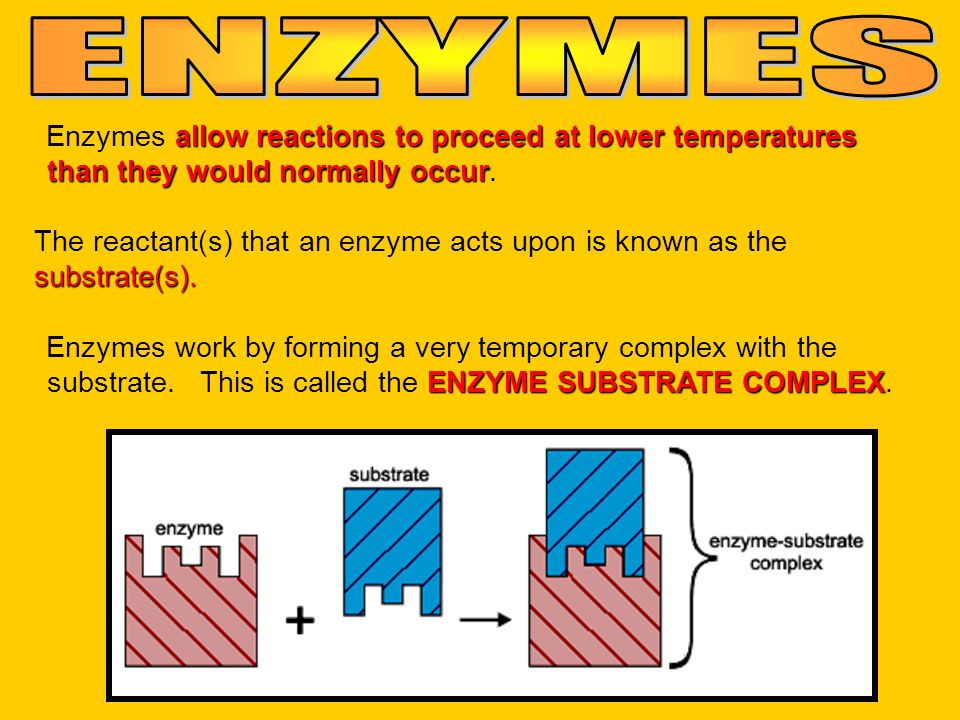 ENZYMES Enzymes allow reactions to proceed at lower temperatures than they would normally occur.