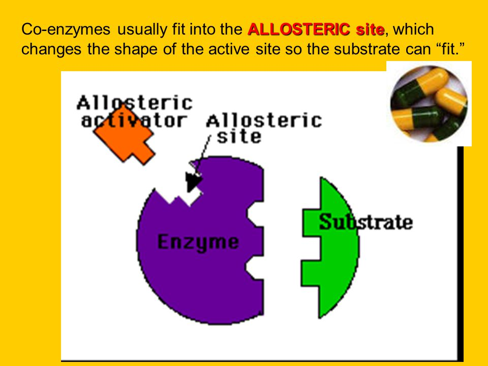 Co-enzymes usually fit into the ALLOSTERIC site, which changes the shape of the active site so the substrate can fit.