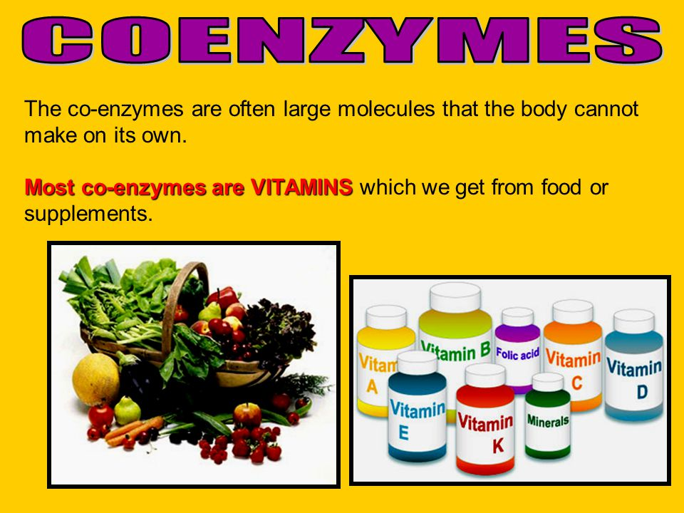 COENZYMES The co-enzymes are often large molecules that the body cannot make on its own.