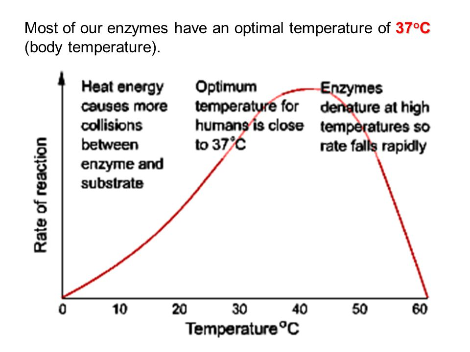 Most of our enzymes have an optimal temperature of 37oC (body temperature).