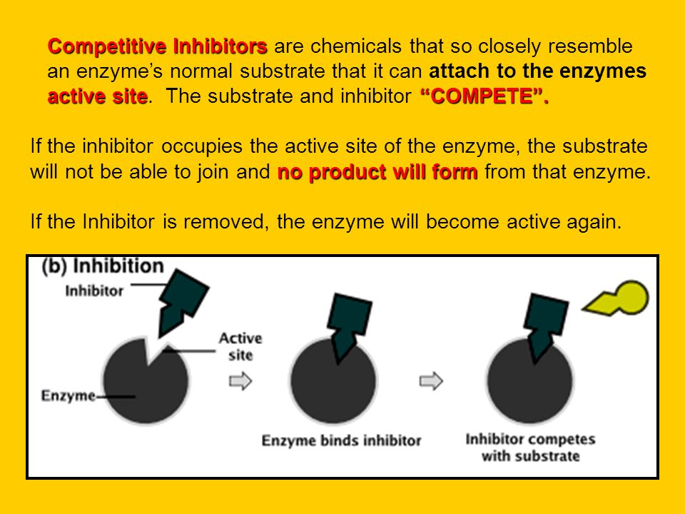 Competitive Inhibitors are chemicals that so closely resemble an enzyme's normal substrate that it can attach to the enzymes active site. The substrate and inhibitor COMPETE .