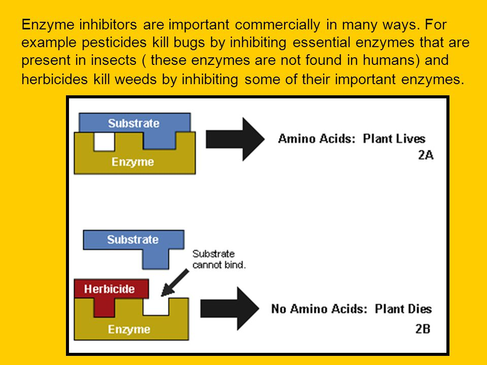 Enzyme inhibitors are important commercially in many ways