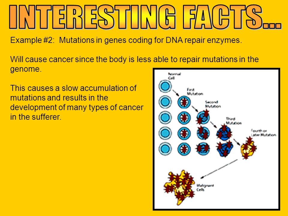INTERESTING FACTS... Example #2: Mutations in genes coding for DNA repair enzymes.