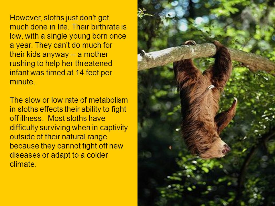 However, sloths just don t get much done in life