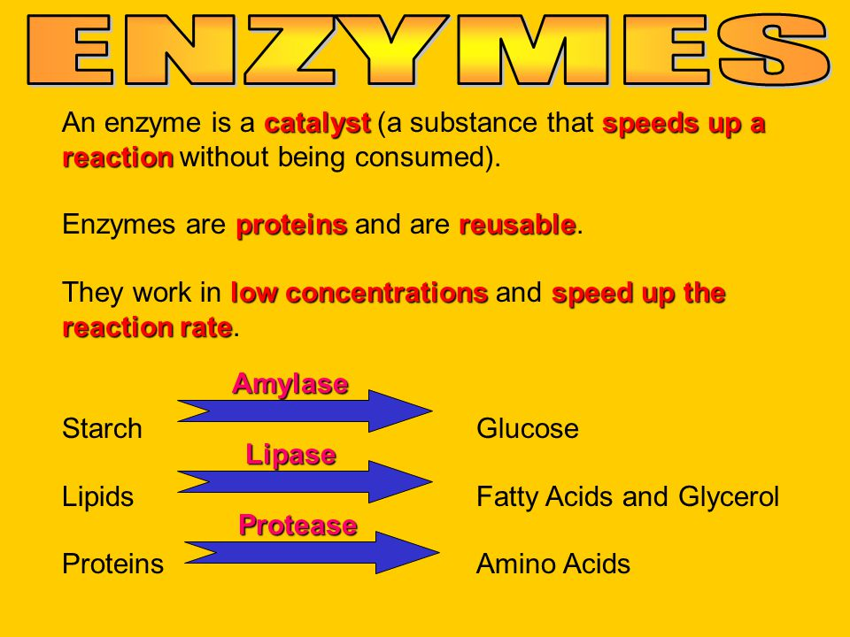 ENZYMES An enzyme is a catalyst (a substance that speeds up a reaction without being consumed). Enzymes are proteins and are reusable.