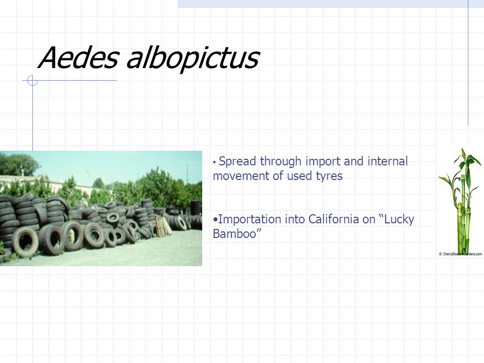 Aedes albopictus Importation into California on Lucky Bamboo
