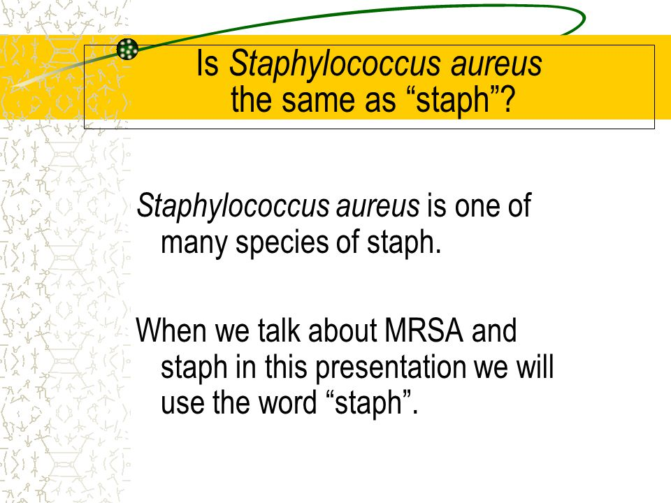 Is Staphylococcus aureus the same as staph