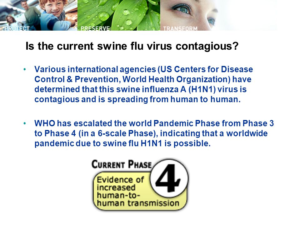 Is the current swine flu virus contagious