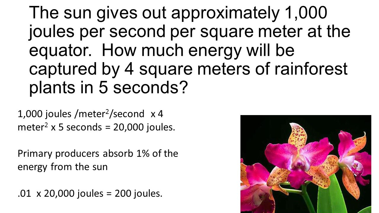 The sun gives out approximately 1,000 joules per second per square meter at the equator. How much energy will be captured by 4 square meters of rainforest plants in 5 seconds