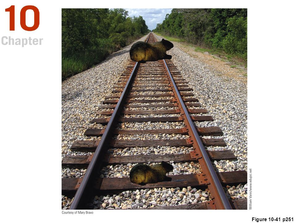 Figure 10. 41 The Ponzo (or railroad track) illusion