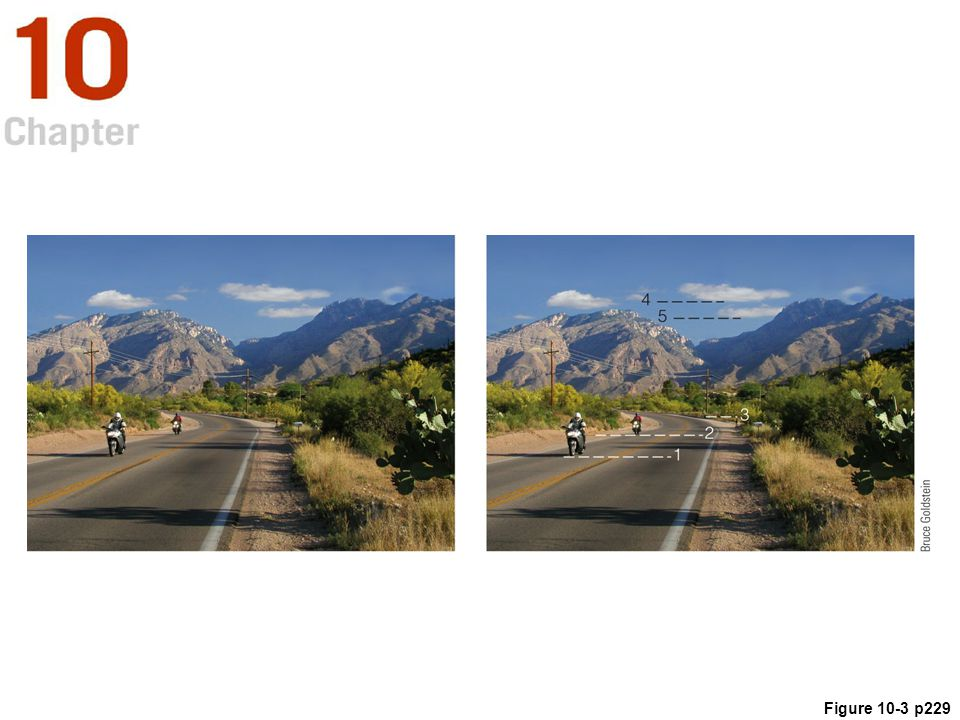 Figure 10.3 (a) A scene in Tucson, Arizona, containing a number of depth cues: occlusion (the cactus on the right occludes the hill, which occludes the mountain); relative height (the far motorcycle is higher in the field of view than the closer motorcycle); relative size (the far motorcycle and telephone pole are smaller than the near ones); and perspective convergence (the sides of the road converge in the distance). (b) 1, 2, and 3 indicate the increasing height in the field of view of the bases of the motorcycles and the far telephone pole, which reveals that being higher in the field of view causes objects on the ground to appear farther away; 4 and 5 reveal that being lower in the field of view causes objects in the sky to appear farther away.