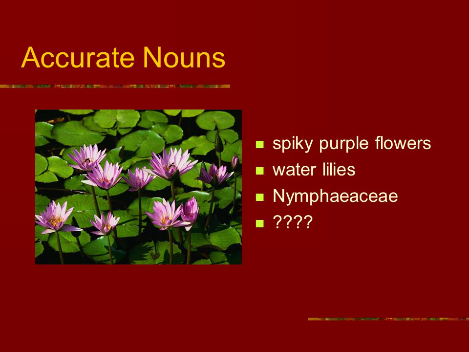 Accurate Nouns spiky purple flowers water lilies Nymphaeaceae