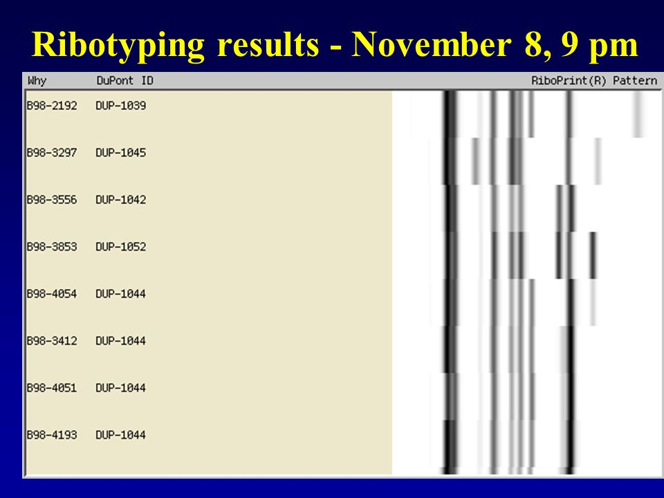 Ribotyping results - November 8, 9 pm