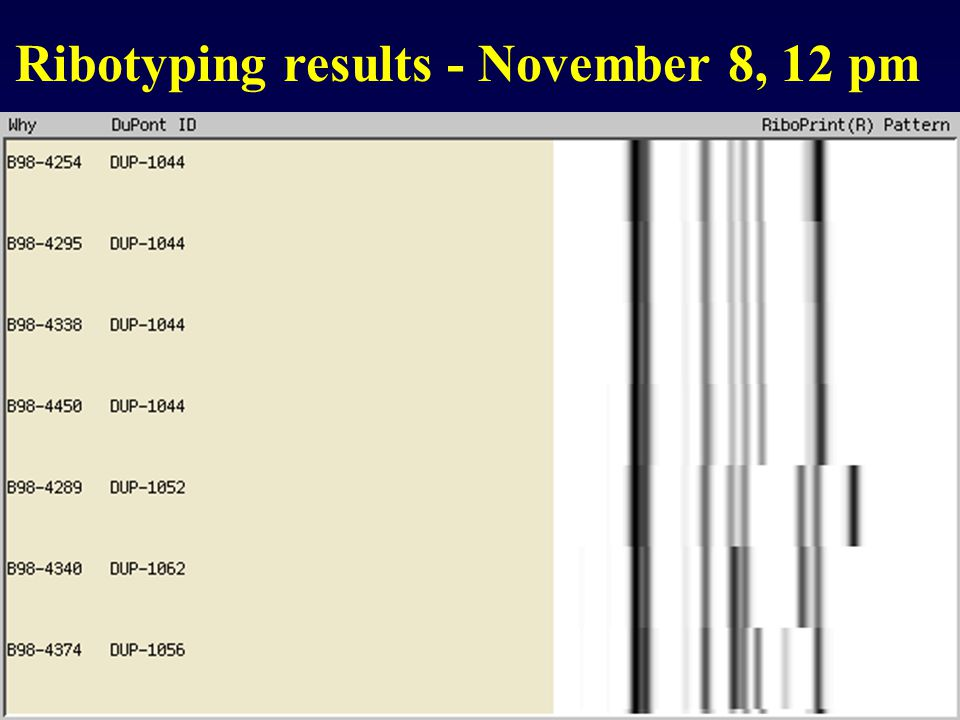 Ribotyping results - November 8, 12 pm