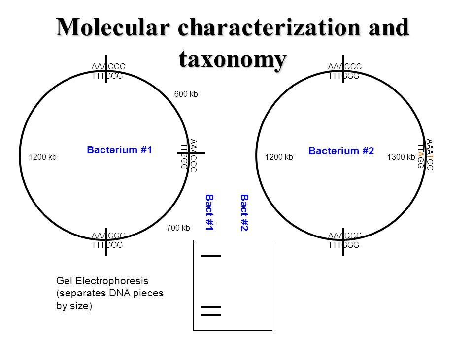 Molecular characterization and taxonomy
