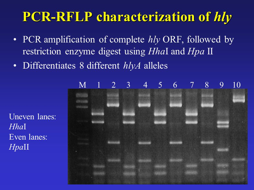 PCR-RFLP characterization of hly