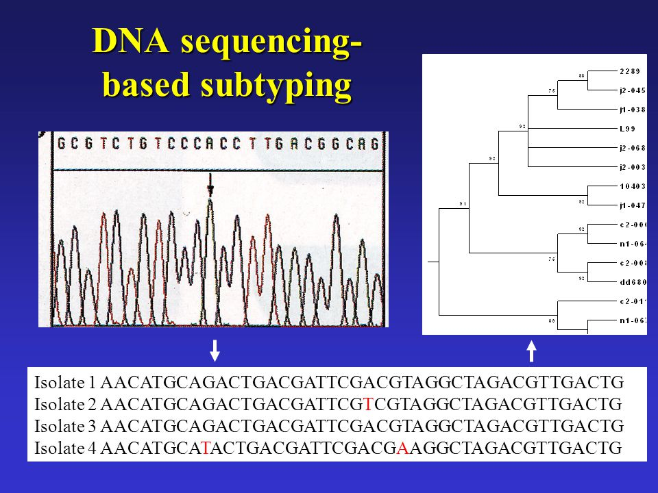 DNA sequencing-based subtyping