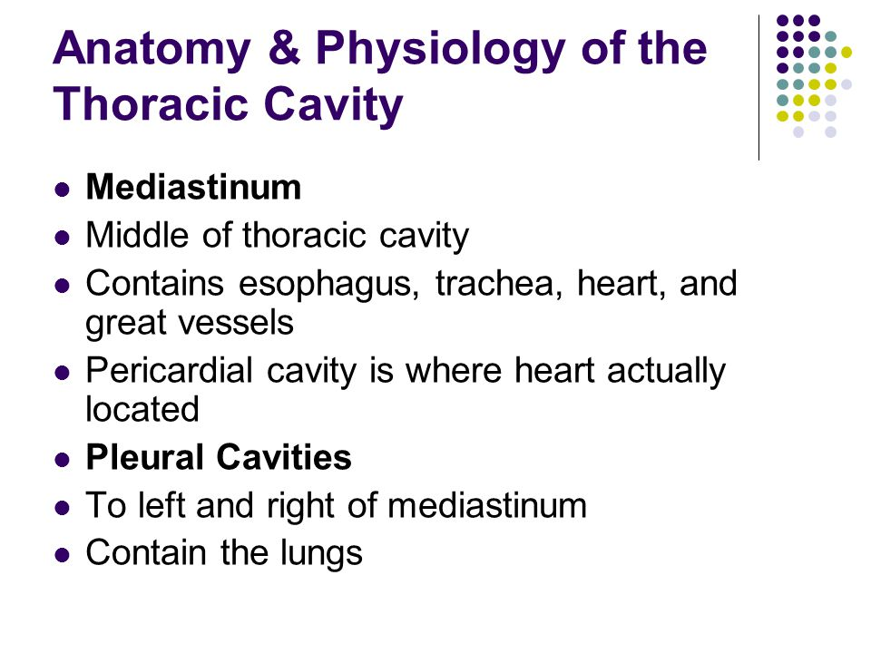 Anatomy & Physiology of the Thoracic Cavity